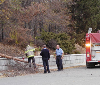 A Kelowna fire crew deals with one of many trees felled by the wind Monday.  (Photo: Malcolm Petch - Castanet)