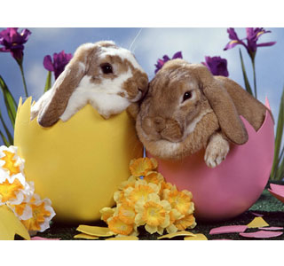 The excitement of Easter is shared by the Pair of Gourmands in 'Chicks, bunnies and tulips'. (Photo: Contributed)