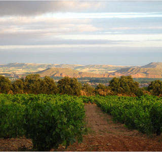 Vineyard in Spain.  (Photo: Flickr user, prairiegirl33)