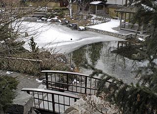 Kasugai re opening beckons spring kelowna news for Koi pond kelowna
