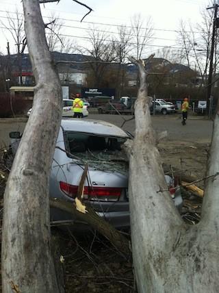Spring storm brings down this tree on Totom Rd. in Kelowna