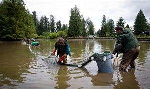 Lake monster caught in pond bc news for Koi pond kelowna