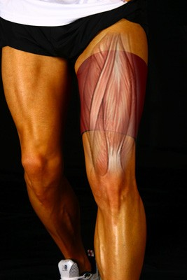 Compartment syndrome of the thigh Physio MattersQuadriceps Tendon Pain