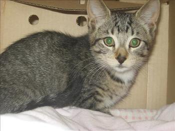Vernon Spca Cats For Adoption