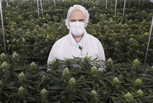 how to become a licensed marijuana producer in bc