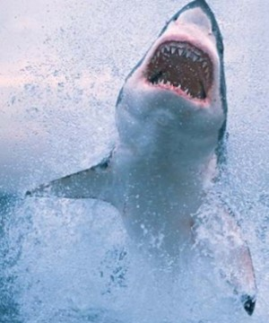 Experts say 2015 saw a record-setting 98 unprovoked shark attacks worldwide, including 30 in Florida alone.