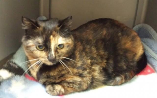 Okanagan Cat Coalition Adoption