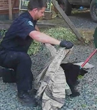 Orphaned bear cubs will soon be released, tracked with GPS collars.