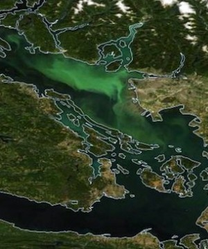 A giant algae bloom off B.C.'s South Coast has turned the normally blue ocean green.