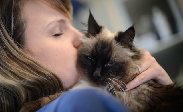 Kelowna Spca Cats For Adoption