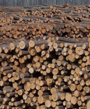 Wildfires pushing lumber prices higher, and stocks for forest companies.