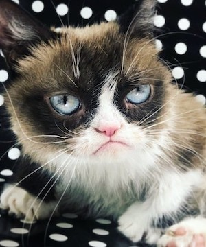 Internet sensation Grumpy Cat is dead, owners confirm.