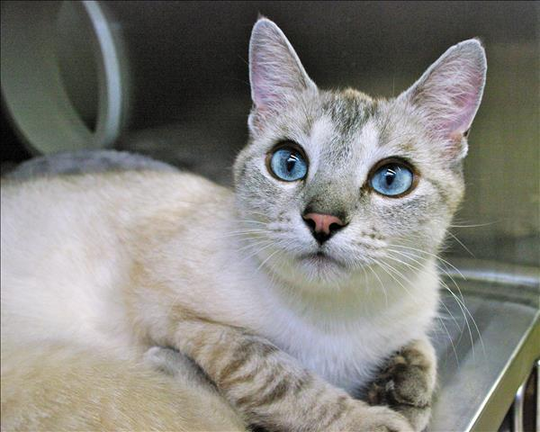 Katniss-Pending Adoption