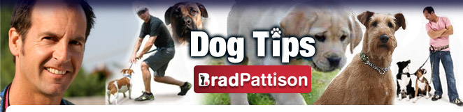 Brad Pattison's Dog Tips