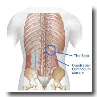 Quadratus Lumborum Needle Notes Castanet Net