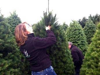 Where Do Christmas Trees Come From About The House