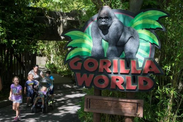Gorilla exhibit barrier didn't meet USA standards when Harambe was shot