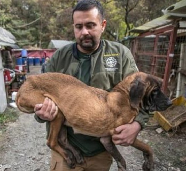 An animal welfare group says dozens of dogs rescued from a dog meat farm in South Korea have arrived in Canada.