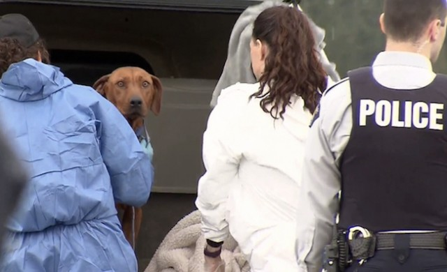 BC SPCA back at Langley property where 80 animals were seized