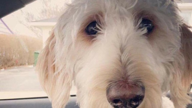 Dog goes missing in Hamilton after being put on wrong flight