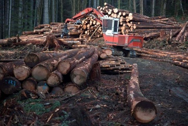U.S. softwood duties could kill 2000 Canadian jobs, says think tank