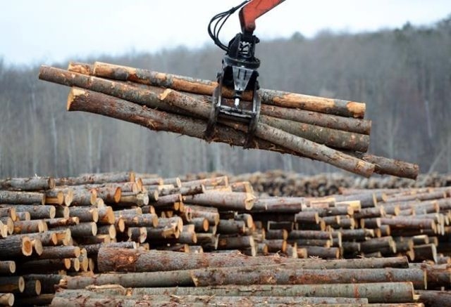 Softwood aid 'undermines the government's trade case': Money manager