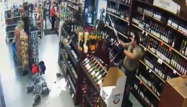 Funny CCTV footage shows a peahen trashing liquor store