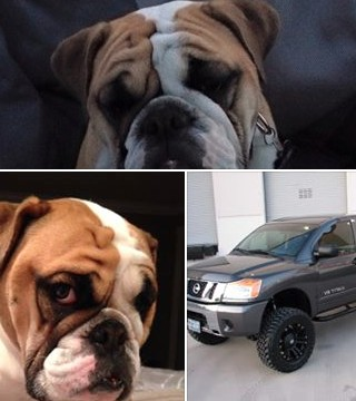 An English Bulldog, named Ellie Mae, and 2015 lifted Nissan Titan were stolen in Oliver on Saturday afternoon, according to a Facebook posting by the owner.