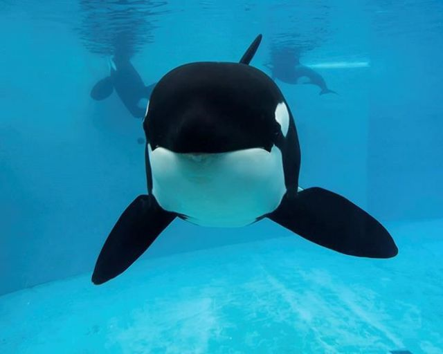 Killer whale put to death at SeaWorld: Sick orca starred in 'Blackfish'