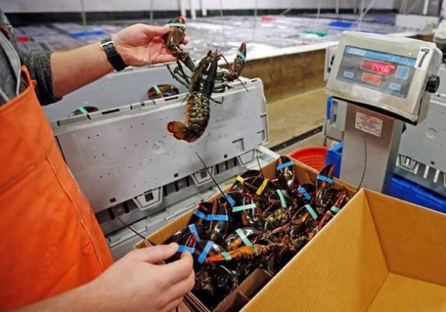 Switzerland Considers the Feelings of the Lobster