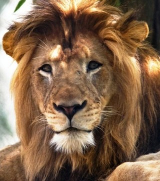 The Indianapolis Zoo wants to find out why a female lion killed its mate last week.