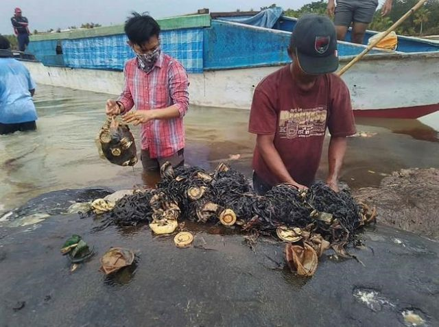 Dead whale had 115 plastic cups in stomach