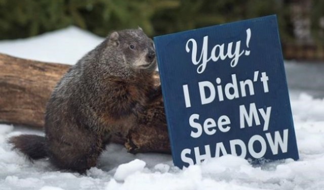 Well, Wiarton Willie says six more weeks of winter