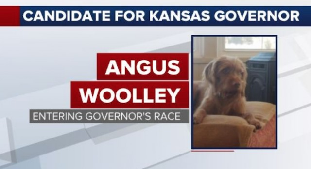 Going to the Dogs: Angus the Terrier Blocked from Kansas Governor's Race