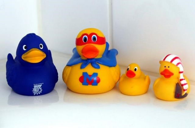 Rubber ducky bath toys harbor bacteria