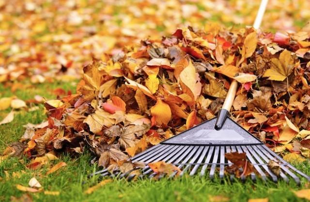 Yard waste clean up - Vernon News - Castanet.net