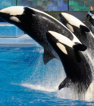 A new study indicates Canadians are increasingly concerned about cetaceans in captivity.