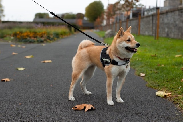 Halloween Dog Walk takes place Oct. 27 in Kelowna - Kelowna News