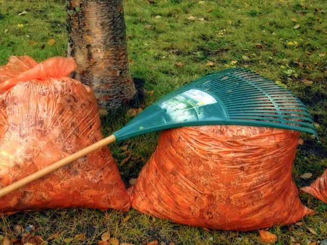 Vernon leaf bag collection is over, but still time for leftover leaves - Vernon News - Castanet.net