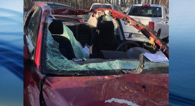Kamloops woman in Edmonton hospital after moose collision - Kamloops News