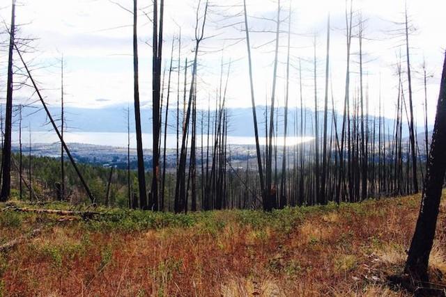UBCO will host panel to discuss forest restoration - Kelowna News - Castanet.net
