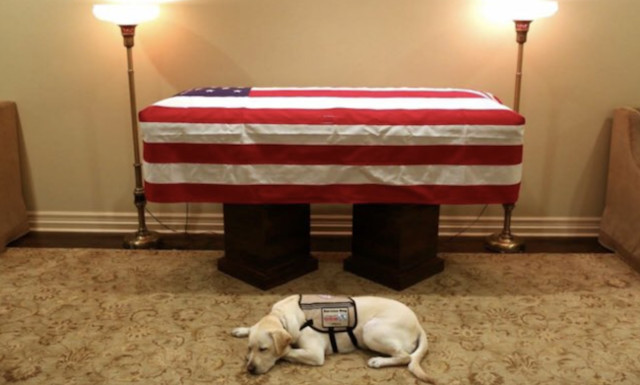 Bush Service Dog Joins Ranks At Walter Reed