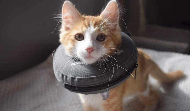 You can help sat-on cat - Kamloops News