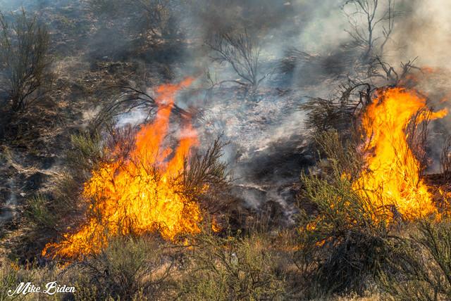 Wildfire app may be doused - Kelowna News