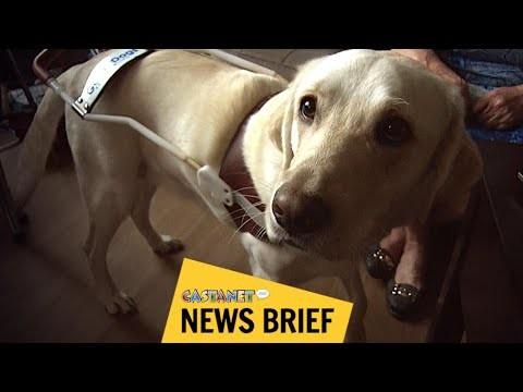 Open doors for guide dogs - Kelowna News
