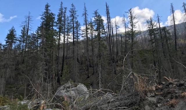 The fire season that wasn't - BC News