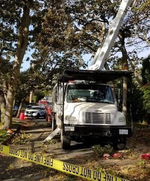 Worker dies on tree removal job site on Vancouver Island.