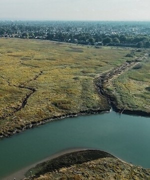 Fraser River species at risk of extinction as estuary under continued threat.
