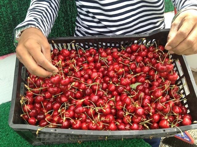 cherries p3442284.