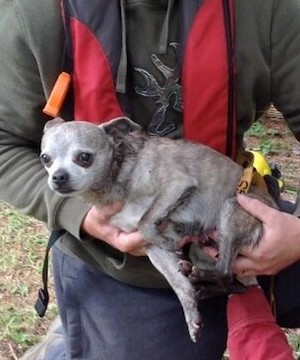Chihuahua rescued after fall down Vancouver Island well.
